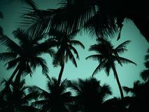 Силуэт кокосовой пальмы на пляже Стоковое фото RF