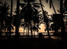 Силуэт кокосовой пальмы на пляже Стоковое Изображение