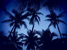 Силуэт кокосовой пальмы на пляже Стоковые Изображения