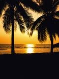 Силуэт кокосовой пальмы на пляже Стоковые Фотографии RF