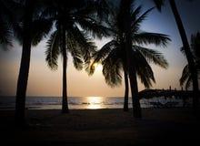 Силуэт кокосовой пальмы на пляже Стоковая Фотография RF
