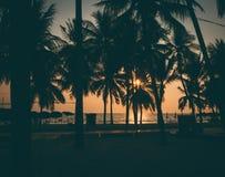 Силуэт кокосовой пальмы на пляже Стоковое Фото