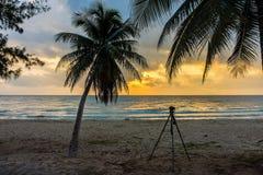 Силуэт кокосовой пальмы с камерой и треноги на пляже Стоковое Фото