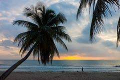 Силуэт кокосовой пальмы с человеком и собакой на пляже в утре Стоковое Изображение