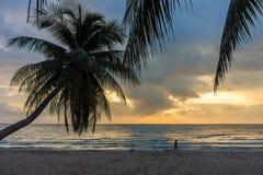 Силуэт кокосовой пальмы с человеком на пляже в утре Стоковые Изображения