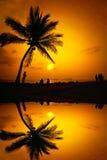 Силуэт кокосовой пальмы Стоковое Изображение RF