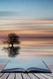 Силуэт концепции книги дерева на спокойном ландшафте воды океана на Стоковые Фото