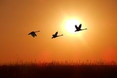Силуэт красивой тропической птицы Стоковые Изображения
