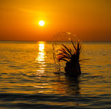 Силуэт к красивой девушке на заходе солнца Стоковое Фото