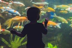 Силуэт мальчика смотря рыб в аквариуме Стоковое Фото