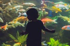 Силуэт мальчика смотря рыб в аквариуме Стоковые Изображения