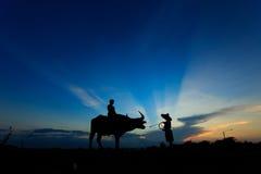 Силуэт мальчиков при буйвол стоя в утре Стоковые Изображения