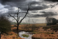 Силуэт мертвого дерева против серой предпосылки неба Стоковые Изображения