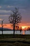 Силуэт мертвого дерева Стоковые Изображения