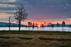 Силуэт мертвого дерева Стоковые Фото