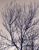 Силуэт мертвого дерева Стоковая Фотография RF