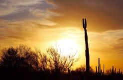 Силуэт национального парка Saguaro на заходе солнца Стоковое Изображение RF