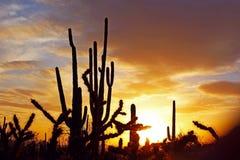 Силуэт национального парка Saguaro Стоковая Фотография RF