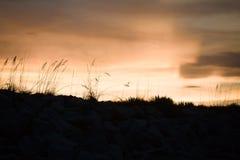 Силуэт овсов моря на заходе солнца Стоковые Изображения