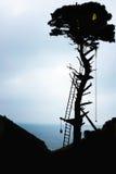 Силуэт дома на дереве Стоковое Фото