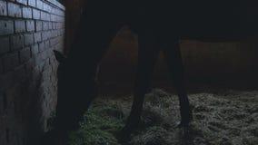 Силуэт лошади есть траву акции видеоматериалы