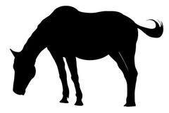Силуэт лошади изолированный на белой предпосылке бесплатная иллюстрация
