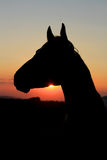 Силуэт лошади на заходе солнца Стоковая Фотография RF