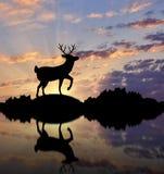 Силуэт оленей Стоковое Изображение RF