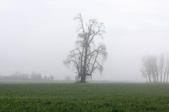 Силуэт одиночного изолированного дерева зимы Стоковое Изображение RF