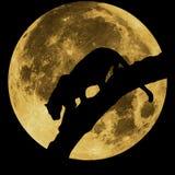 Силуэт пантеры на предпосылке луны Стоковое Изображение