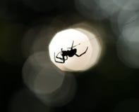 Силуэт паука на сети Стоковая Фотография RF
