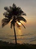 Силуэт пальмы против захода солнца в Индии Стоковое Изображение RF