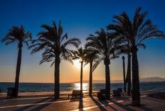 Силуэт пальм на заходе солнца Набережная Salou, Испании Стоковое Фото
