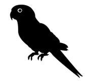 Силуэт попугая Стоковое Изображение