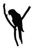 Силуэт попугая Стоковое Фото