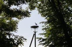 Силуэт птицы аиста в поляке электричества гнезда Стоковое Изображение