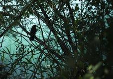 Силуэт птицы в кусте Стоковая Фотография