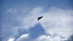 Силуэт птицы в небе стоковое изображение