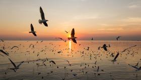 Силуэт птицы летая над морем Стоковая Фотография