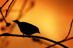 Силуэт птицы на ветви Стоковое Фото