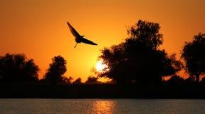 Силуэт птицы на предпосылке захода солнца Стоковые Изображения