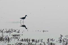 Силуэт птицы Стоковое фото RF