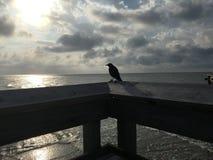 Силуэт птицы Стоковая Фотография