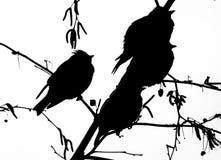 Силуэт птиц Стоковое Изображение RF