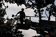 Силуэт работника на ветвях дерева вырезывания крана с цепной пилой Стоковое фото RF