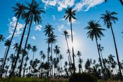 Силуэт рощи кокоса на небе с влиянием пирофакела объектива солнца Стоковое Изображение RF