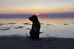 Силуэт собаки на зоре Стоковое Изображение RF
