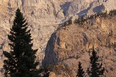 Силуэт сосны против горы каскада стоковое изображение