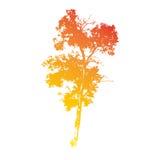 Силуэт старого лиственного высокого дерева Стоковые Изображения