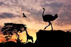 Силуэт страуса Стоковые Изображения